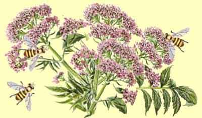 Чай и травы как средства для крепкого сна при бессоннице